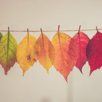leaves arranged on string from green to red