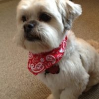 Herbie, dog in red bandana