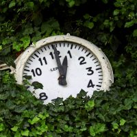 clock in ivy