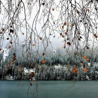 tree branches, snow, and winter lake