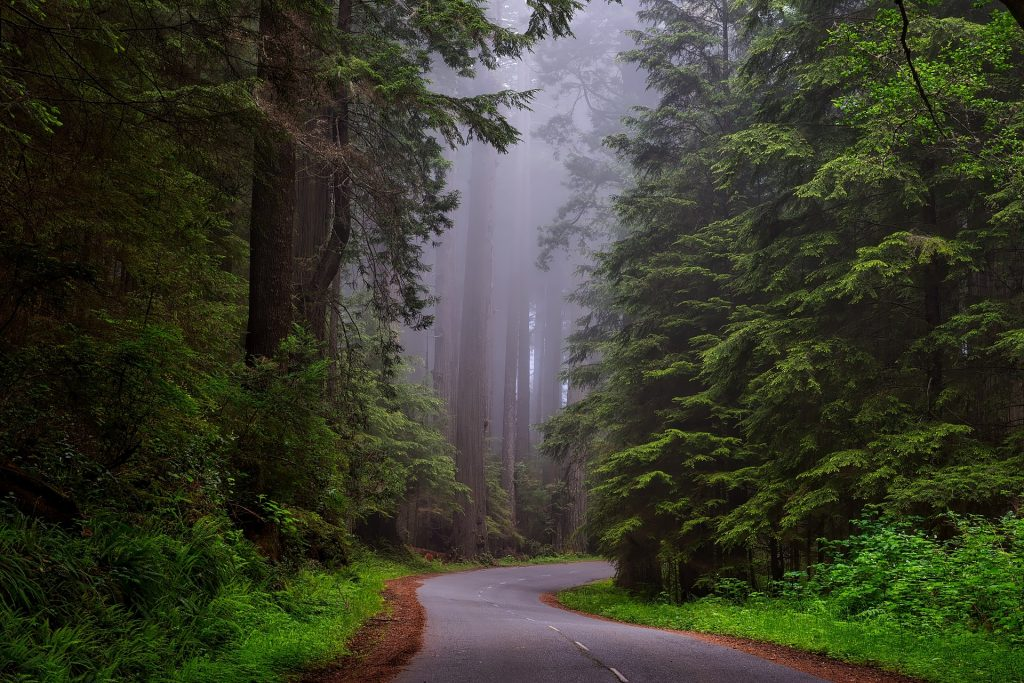 road leading to redwoods
