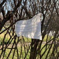 surgical mask caught in branches