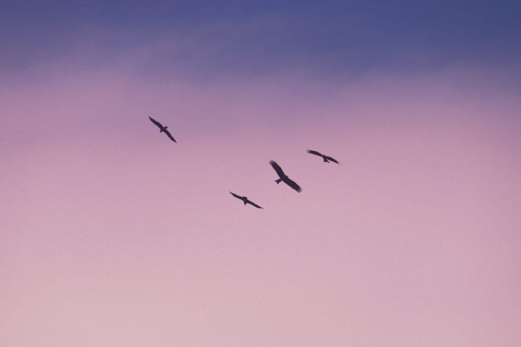 hawks or eagles coasting